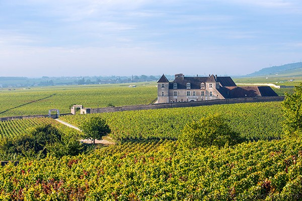 Burgundy - Yonne - Auxerre - Vézelay - Semur - Beaune - vineyards - tastings
