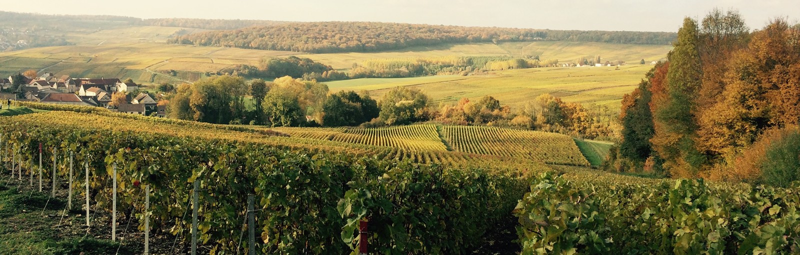Tours Champagne - Burgundy - Multi-regional - Multiday tours from Paris