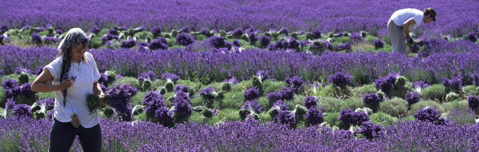 Tours Provence - Full days - Day tours from Paris