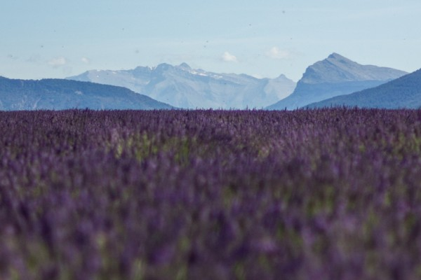 Provence - Regional tours