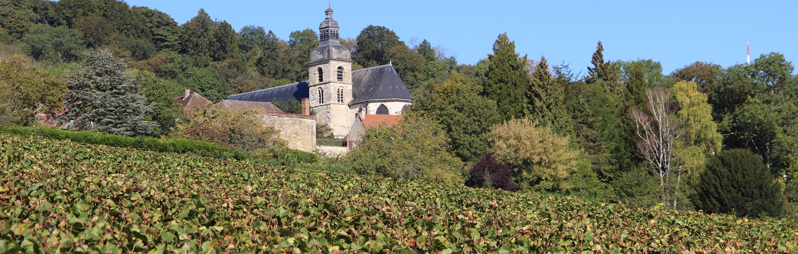 Tours Reims - Champagne - Full days - Day tours from Paris