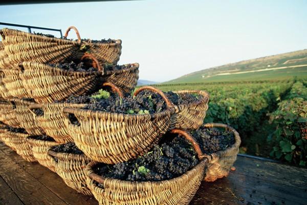 Burgundy wine tour