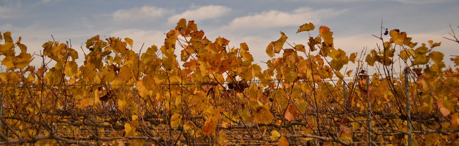 Tours Champagne - Burgundy - Berry - Multi-regional - Multiday tours from Paris